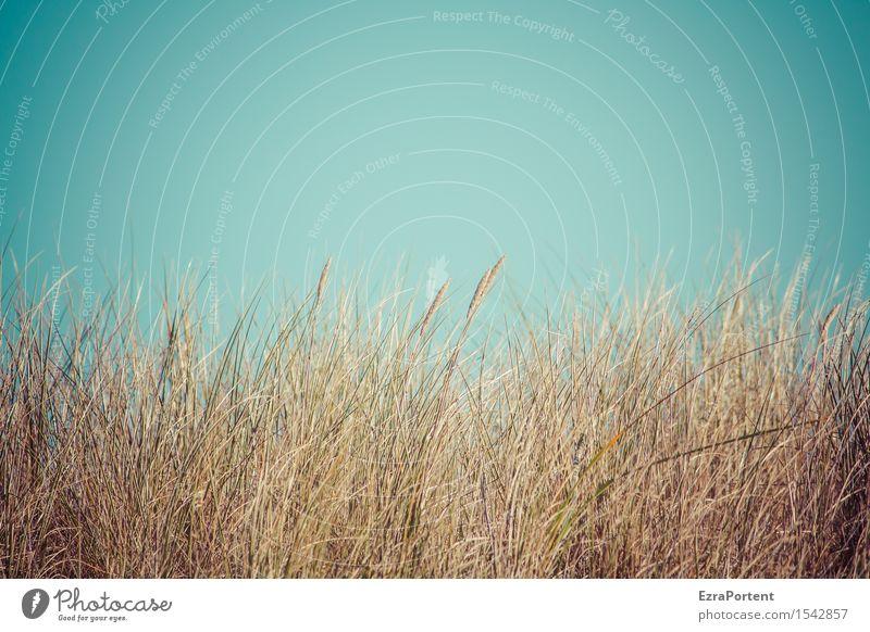 Ostsee Ferien & Urlaub & Reisen Strand Umwelt Natur Luft Himmel Wolkenloser Himmel Frühling Sommer Herbst Pflanze Gras blau braun Düne Dünengras Farbfoto