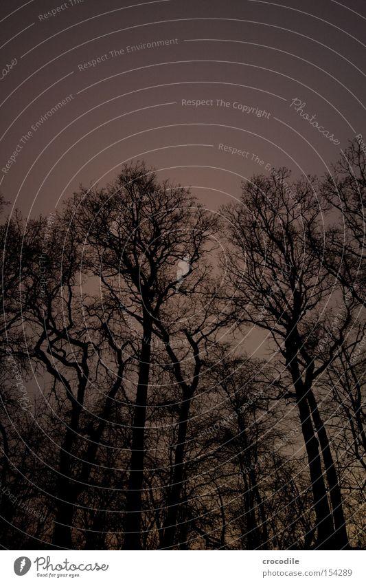 nachtschattengewächs Baum Ast Holz Nacht dunkel beängstigend Angst Panik Langzeitbelichtung gefährlich tree Baumkrone