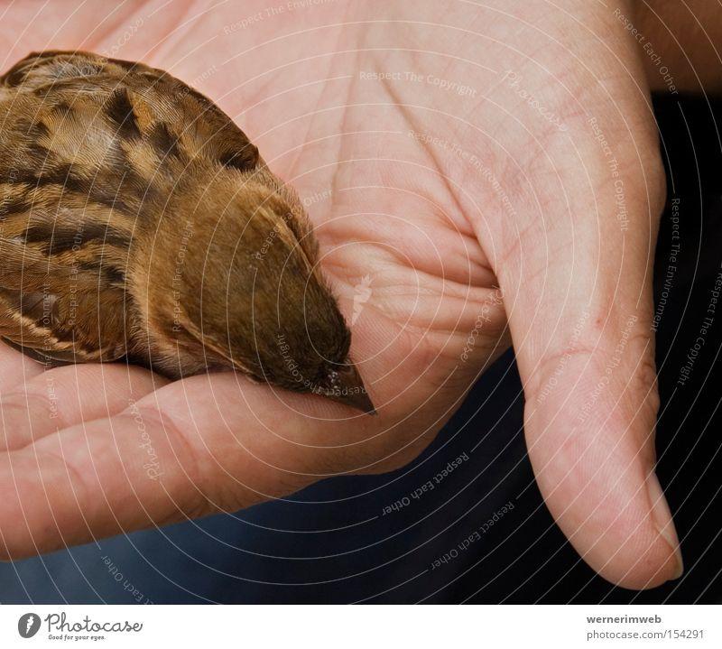 Lieber der Spatz in der Hand ... Tod Vogel braun Feder Fensterscheibe zerbrechlich sensibel verwundbar Sprichwort