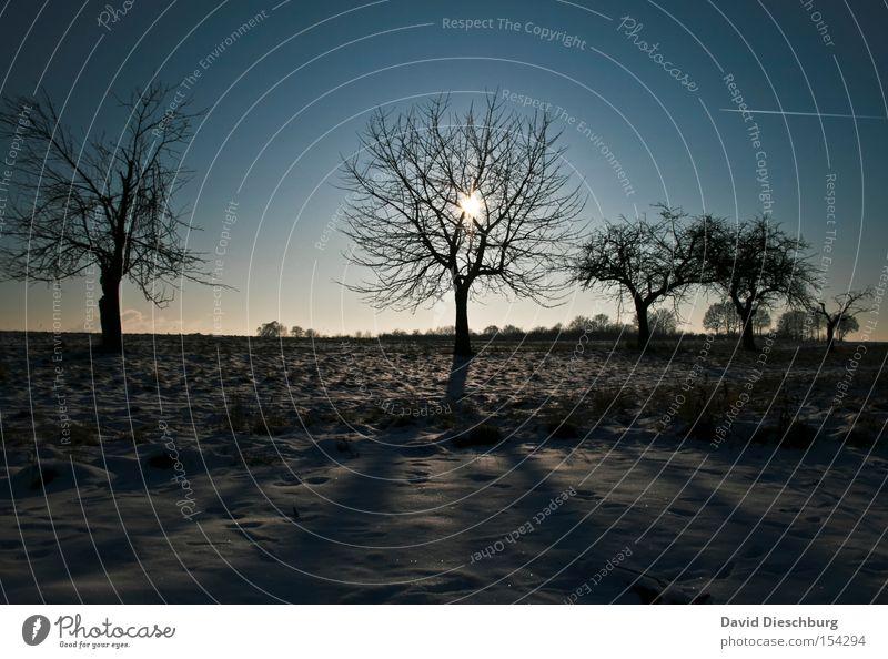 Portrait des Winters Sonne Baum Winter kalt Wiese Schnee Feld Ast Baumstamm
