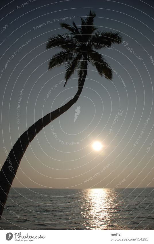 Palme Strand Sonne Kerala Indien Ferien & Urlaub & Reisen Meer Gegenlicht Traumstrand Sonnenuntergang Arabisches Meer Varkala mofiz