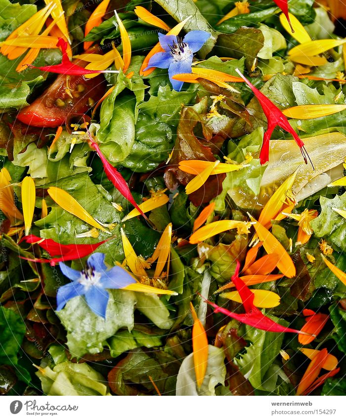 Regenbogen-Vitamine grün Ernährung Gemüse Blüte Gesundheit Lebensmittel mehrfarbig Gastronomie Salat Blütenblatt Kalorie Ringelblume Vegetarische Ernährung