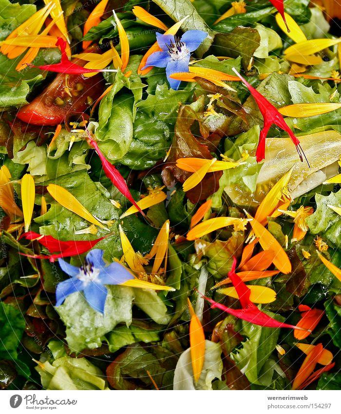 Regenbogen-Vitamine grün Ernährung Gemüse Blüte Gesundheit Lebensmittel mehrfarbig Gastronomie Vitamin Salat Blütenblatt Kalorie Ringelblume Vegetarische Ernährung Borretsch Naturgarten