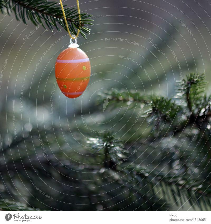 ei ei ei... Feste & Feiern Ostern Umwelt Natur Pflanze Frühling Baum Wildpflanze Fichte Tanne Zweig Wald hängen Wachstum außergewöhnlich einzigartig Kitsch grau