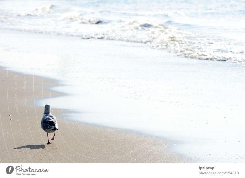 Lonely... Wasser weiß Meer Strand Ferien & Urlaub & Reisen Einsamkeit Tier träumen Denken Sand Vogel Küste