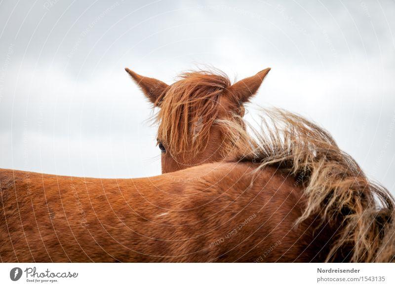 Ich sehe dich..... Freizeit & Hobby Reiten Landwirtschaft Forstwirtschaft Klima Tier Nutztier Pferd 2 beobachten ästhetisch braun friedlich Wind Pferdekopf