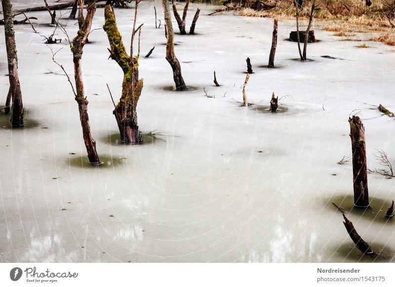 Abkühlung Ausflug Natur Landschaft Urelemente Wasser Frühling Winter Klima Eis Frost Baum Wald Moor Sumpf dunkel ruhig Endzeitstimmung Umwelt