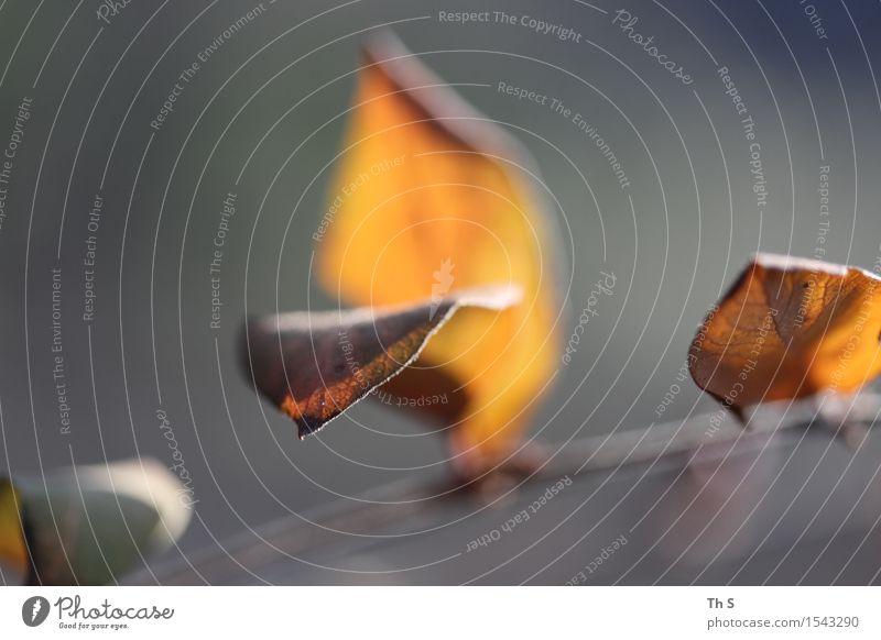 Blatt Natur Pflanze Herbst Winter verblüht ästhetisch authentisch einfach elegant natürlich grau orange rot Gelassenheit geduldig ruhig einzigartig harmonisch