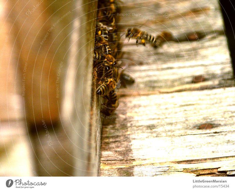 Einflugsschneise Haus Holz Insekt Biene Kasten Stock Einflugloch