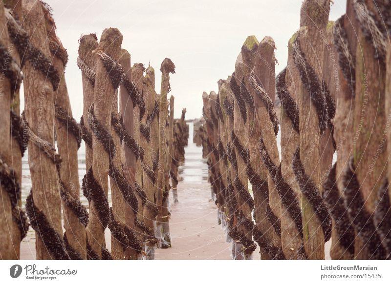 Muschelzucht Strand Verkehr Unendlichkeit Baumstamm Flur Spirale Miesmuschel