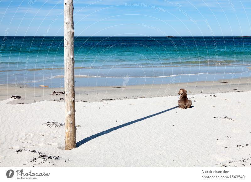 Experiment | Sonnenuhr Ferien & Urlaub & Reisen Ferne Freiheit Sommer Sommerurlaub Sonnenbad Strand Meer Natur Landschaft Wolkenloser Himmel Schönes Wetter
