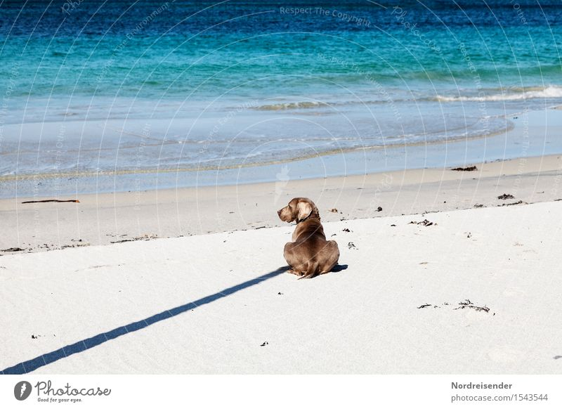 Schattenwurf Ferne Freiheit Sommer Strand Meer Natur Landschaft Schönes Wetter Nordsee Tier Haustier Hund Sand Wasser Zeichen warten Freundlichkeit Fröhlichkeit