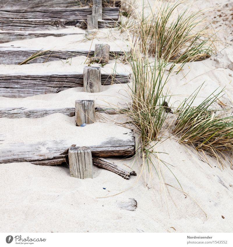 In den Dünen Ferien & Urlaub & Reisen Sommer Meer Erholung ruhig Strand Wege & Pfade Gras Küste Holz Sand Tourismus Treppe Idylle Freundlichkeit Pause