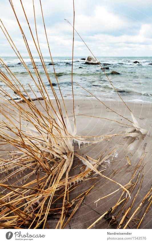 Ostsee Meer Wellen Winterurlaub Natur Landschaft Urelemente Sand Wasser Himmel Wolken Klima Wind Sturm Eis Frost Pflanze Gras Küste Strand kalt maritim bizarr