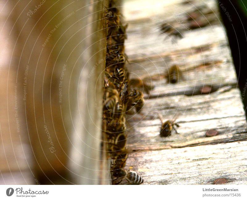Einflugschneise [2] Haus Holz Insekt Biene Kasten Stock Einflugloch