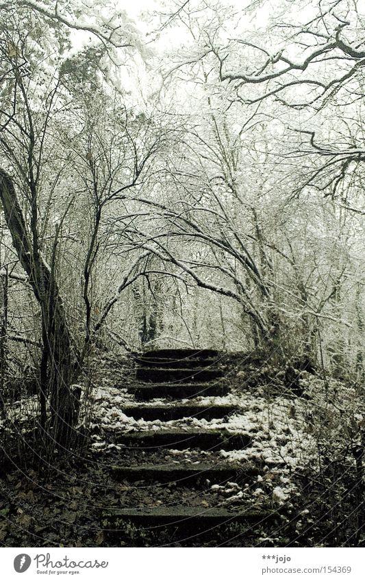 winterreise. Winter ruhig Einsamkeit Wald kalt Schnee Wege & Pfade wandern laufen Treppe Frost steigen