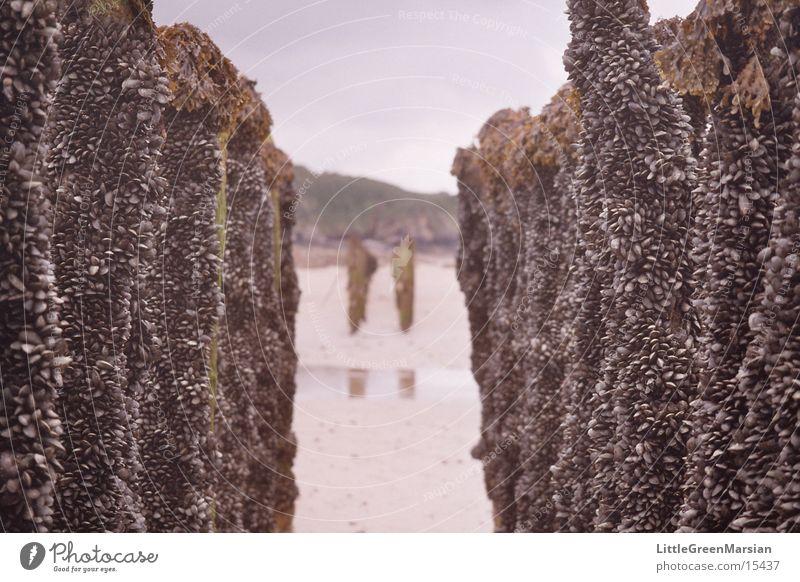 Muschelzucht 02 Strand Verkehr Unendlichkeit Baumstamm Flur Miesmuschel