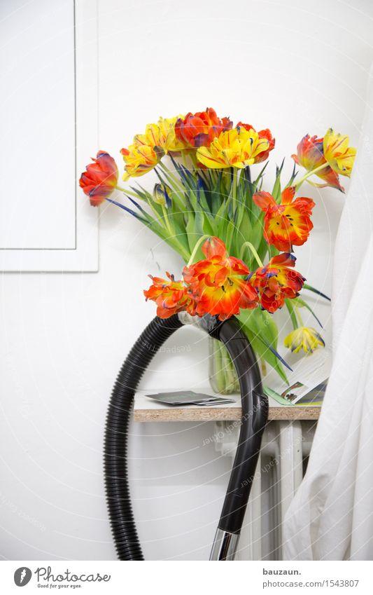 wegsaugen. Häusliches Leben Wohnung Innenarchitektur Dekoration & Verzierung Restaurant ausgehen Feste & Feiern Valentinstag Muttertag Ostern Hochzeit
