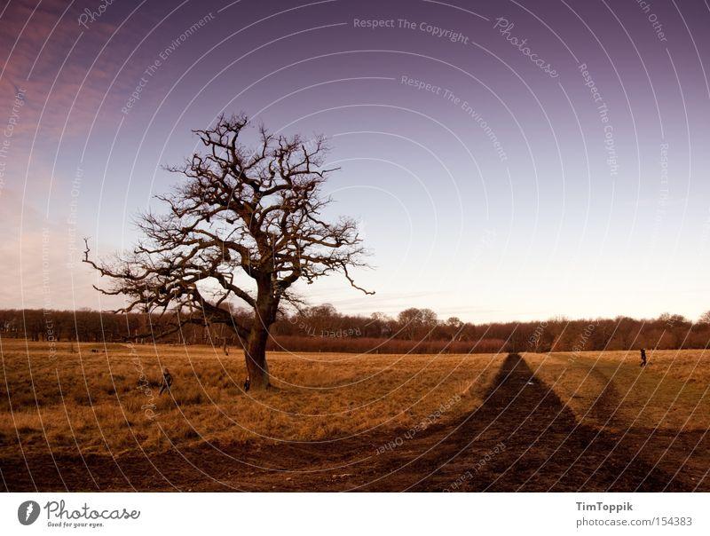Hier jagt die dänische Königin Natur Himmel Baum ruhig Erholung Wege & Pfade Park Landschaft Ast Fußweg Zweig Dänemark Kopenhagen