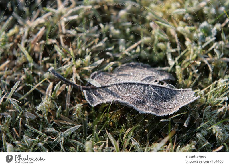 Kältestarre Winter Blatt kalt Schnee Gras Eis Frost Rasen gefroren frieren Raureif Eiskristall