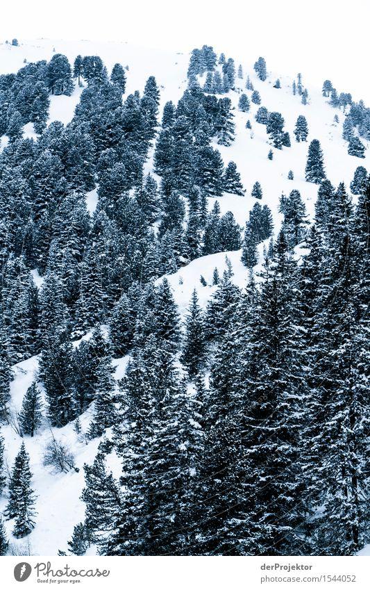 Alles schon mal gepudert für weiße Weihnachten Natur Ferien & Urlaub & Reisen Pflanze Baum Landschaft Tier Freude Ferne Winter Wald Berge u. Gebirge Umwelt