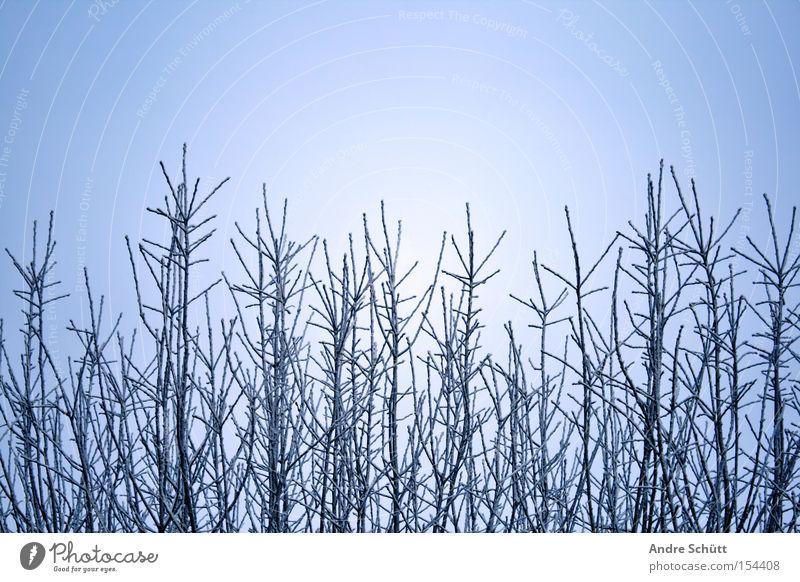 winter world Natur Himmel Baum blau Winter Schnee Ast Jahreszeiten Schönes Wetter Zweig