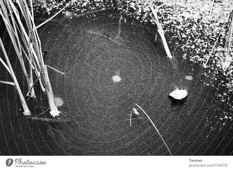 Tiefschwarz tief weiß Wasser Eis gefroren See Teich Schilfrohr Schnee Schwarzweißfoto Winter