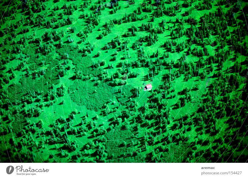 Haus im Grünen grün Haus Einsamkeit Wald USA Amerika Alaska