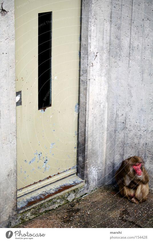 Türsteher vorm Affentheater rot Tier kalt grau Traurigkeit Tür Beton Trauer trist Zoo Eingang Verkehrswege gefangen Säugetier Affen Justizvollzugsanstalt