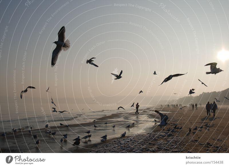 ostseeneujahr Möwe Ostsee Strand Winter Binz kalt Meer Nebel Sonnenaufgang