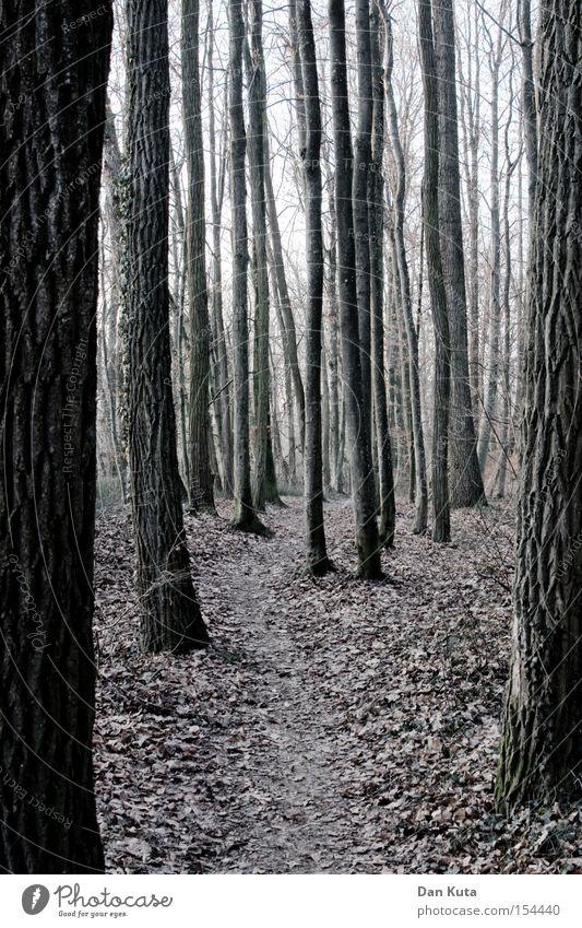 Alles senkrecht. Baum Winter Blatt Wald kalt Herbst Linie Angst Trauer stehen Spaziergang bedrohlich Verzweiflung mystisch vertikal Wurzel
