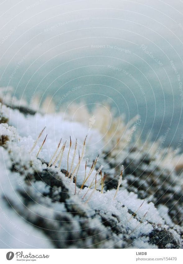 Durchhalten! Pflanze Winter kalt Schnee Stein Ausdauer winterfest Pionierpflanze