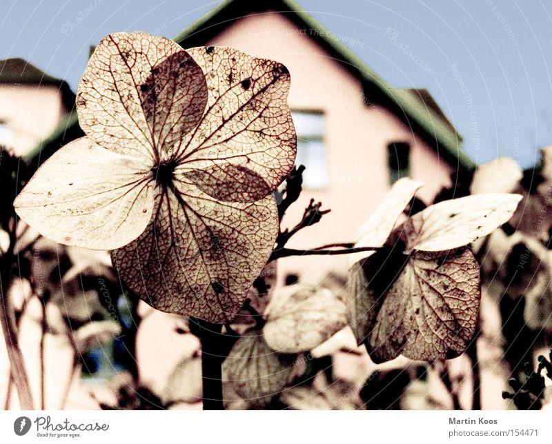 blumen blüten blau schön Blume Winter Blatt Haus kalt Blüte Garten braun Blühend trocken Gefäße verblüht Faser winterfest
