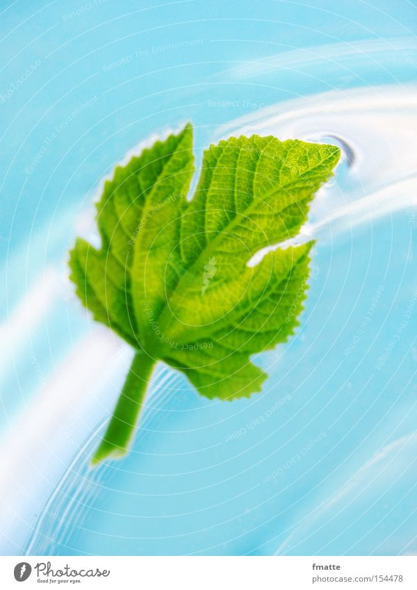 Blatt und Wasser schön grün blau fließen Strömung Feige Feigenblatt