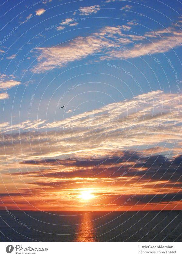 sunset 05 Himmel Sonne Wolken Farbe Vogel