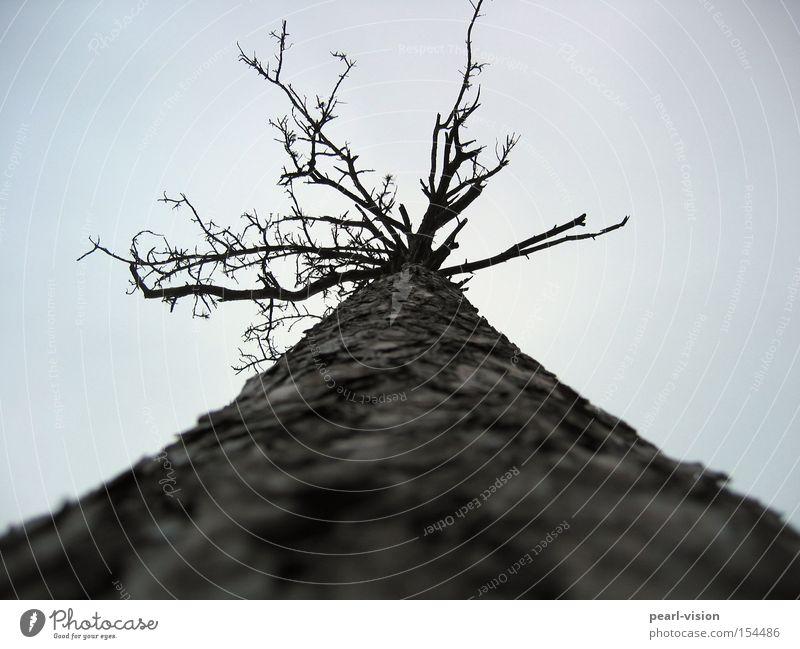 dead rising Himmel Baum Tod hoch Ast Kiefer aufstrebend