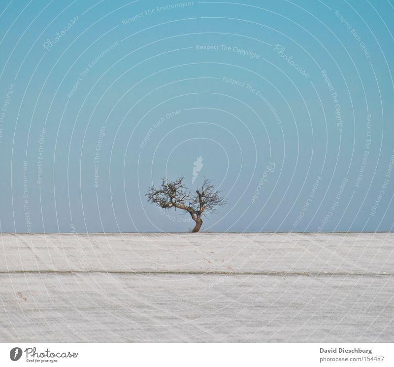 allein, alleine, allein, allein Himmel Baum blau Winter Schnee Wiese Feld Ast Hügel Baumstamm Schönes Wetter Baumkrone