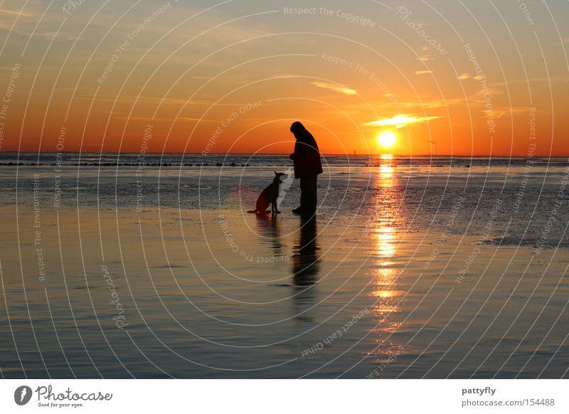 Sitz! Sonnenuntergang Licht Meer Nordsee Mensch Tier Hund kalt Reflexion & Spiegelung Strand Küste Himmelskörper & Weltall Wattenmeer Eis