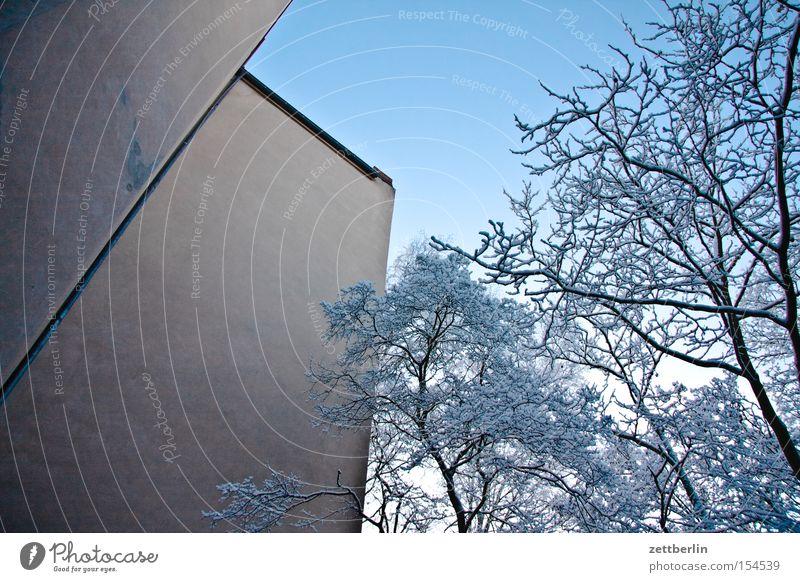 Winter Schnee Neuschnee Baum Baumstamm Ast Zweig Haus Fassade Wand Mauer Brandmauer Hof Hinterhof kalt Klarheit