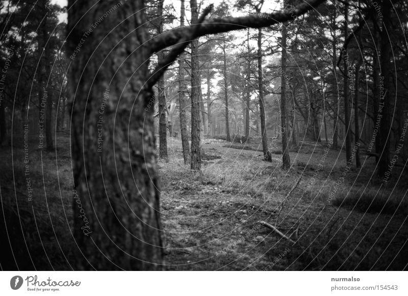 Waldrealismus Winter Wald Wind Insel Ast analog Baumstamm Moos Ostsee Baumrinde Kiefer Waldboden Schonung Windflüchter