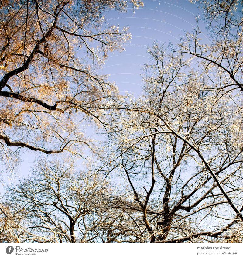 EIN BLICK ERHOLUNG Baum Blatt Ast Baumkrone Himmel Schönes Wetter Schnee kahl Winter Pflanzenteile schön Sonnenstrahlen Idylle verwachsen