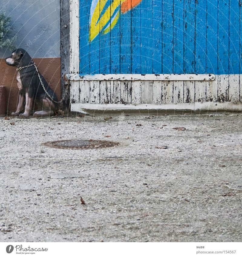 Plaste Elaste Hund Holz Fassade sitzen Dekoration & Verzierung trist Sicherheit Asphalt Tor Wachsamkeit trashig Kette Säugetier falsch verwittert Täuschung