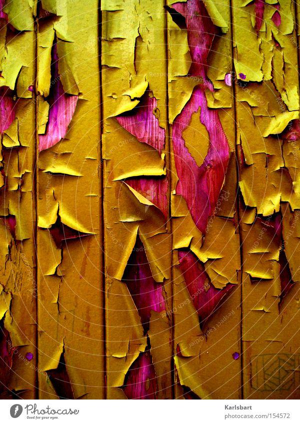herbstlack. und herbstlaub[e]. alt Blatt Farbe Herbst Wand Holz Farbstoff Mauer Linie Kunst Design Fassade ästhetisch Vergänglichkeit Streifen Tapete