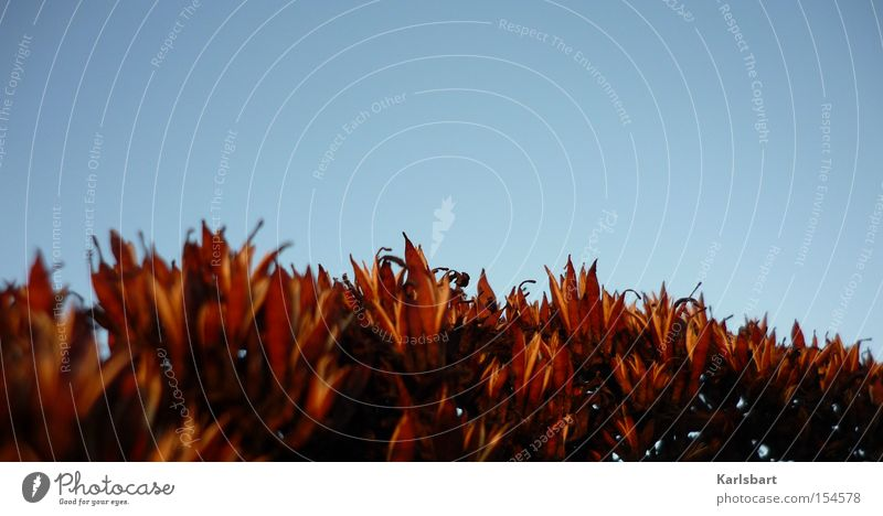 ameisen. Himmel schön rot Pflanze Sommer Ferien & Urlaub & Reisen ruhig Leben Herbst Gras träumen Feld Zufriedenheit Hintergrundbild Design Perspektive