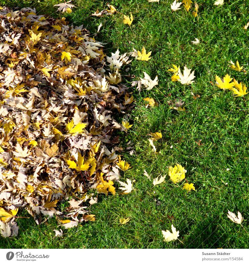 Für Freunde des Haufenprinzip Blatt Farbe Herbst Wiese Gras träumen rein Müll Recycling Haufen Hausmeister Müllmann