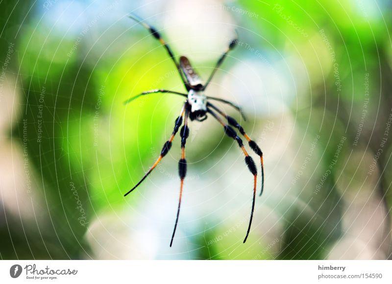 ich glaub ich spinne Spinne Gift gefährlich Tier Lebewesen Hinterhalt Falle Licht Beine Netz Spinnennetz Spinner Spinnerei grün Makroaufnahme Nahaufnahme