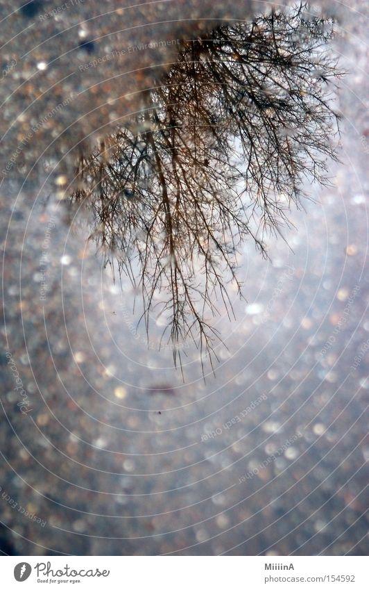 Verkehrte Welt Baum Winter Straße kalt grau nass drehen Geäst verdreht auf dem Kopf