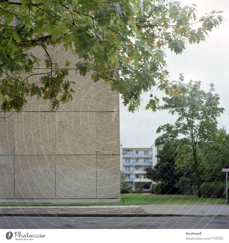 Wohnen im Grünen Cottbus Plattenbau DDR Häusliches Leben Wohngebiet Ghetto Beton grün Baum Herbst Fassade Wohnung Blatt Haus Vergänglichkeit plattenbaugebiet