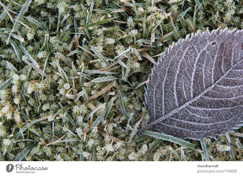 Eisblumen kalt Frost Winter Raureif Eiskristall frieren gefroren Blatt Gras Rasen Schnee