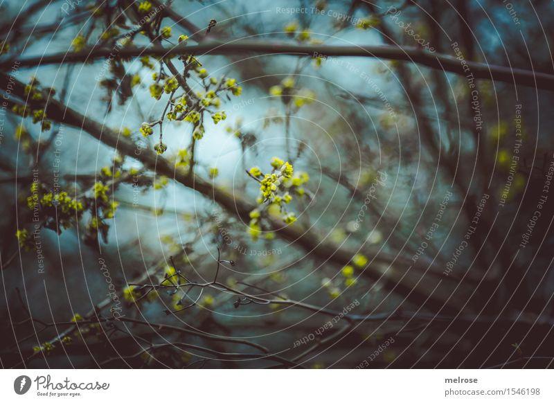 lichtdurchlässig Himmel Natur Stadt Pflanze schön Blume dunkel Wald kalt Umwelt gelb Blüte Frühling braun Stimmung träumen